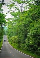 along the way trees