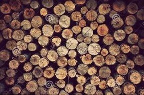 stockpile wood