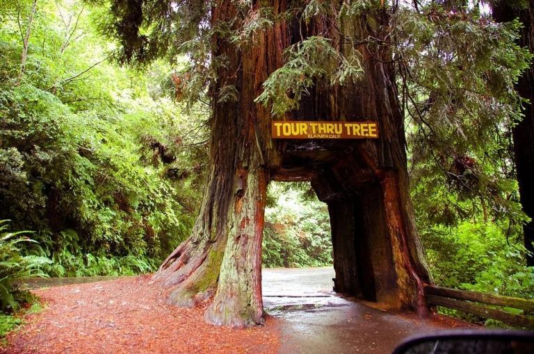 Klamath Tunnel Tree 1