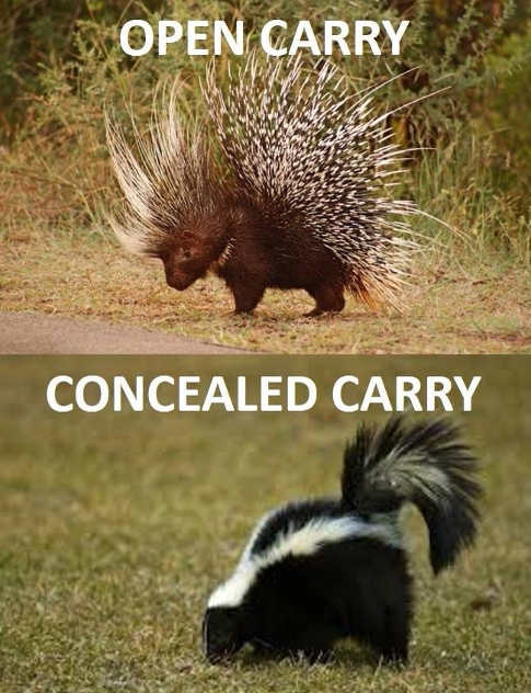open-cary-porcupine-skunk-concealed-carry